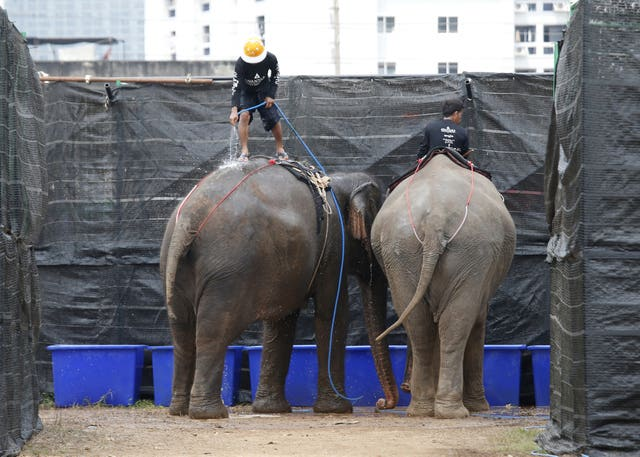 A mahout sprays water on an elephant after the match (Sakchai Lalit/AP)