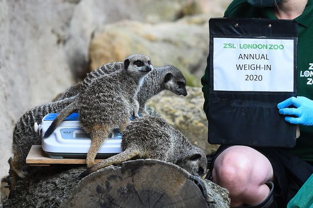 ZSL London Zoo annual weigh-in