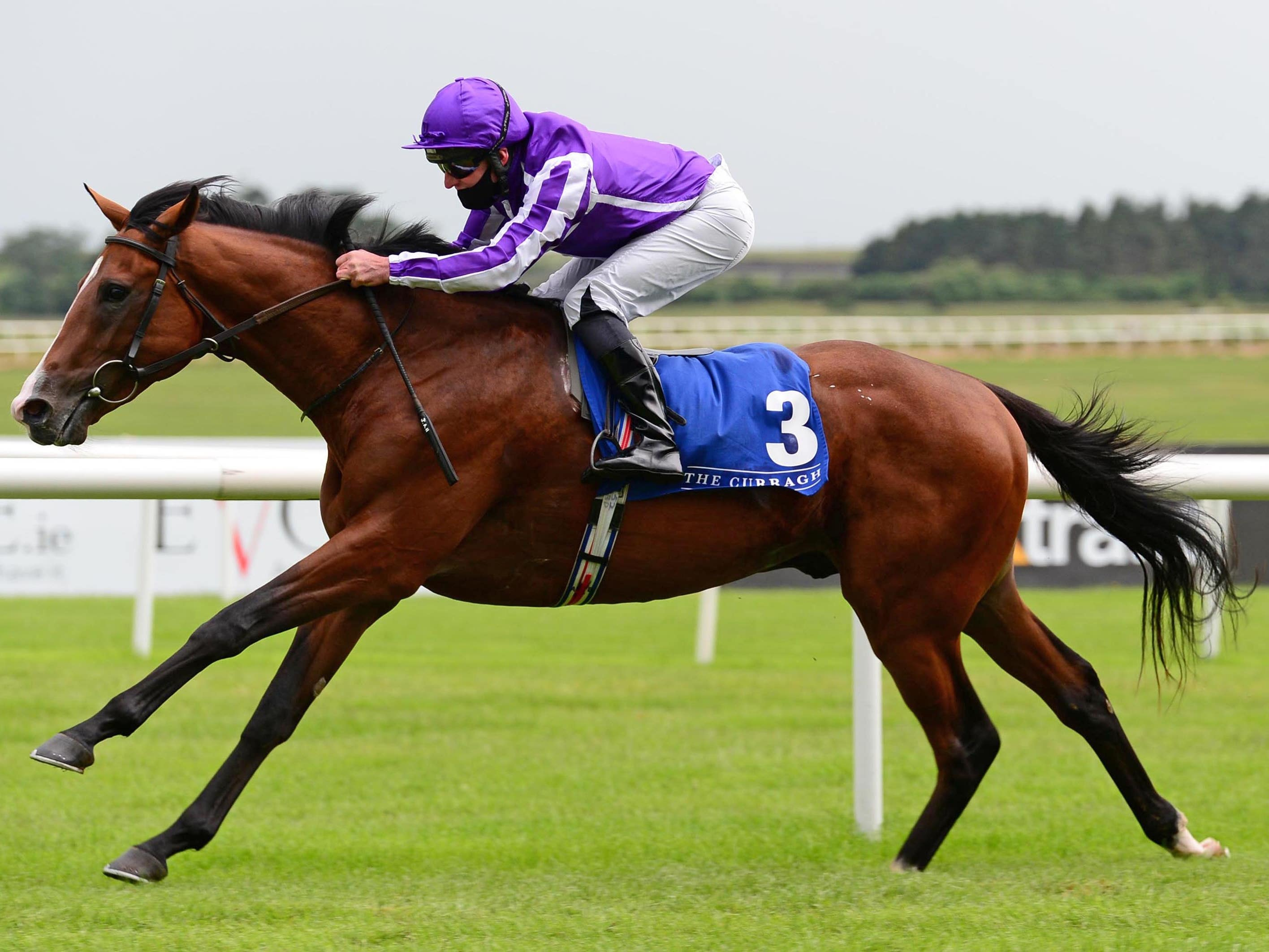 Hudson River struck gold at the Curragh (PA)