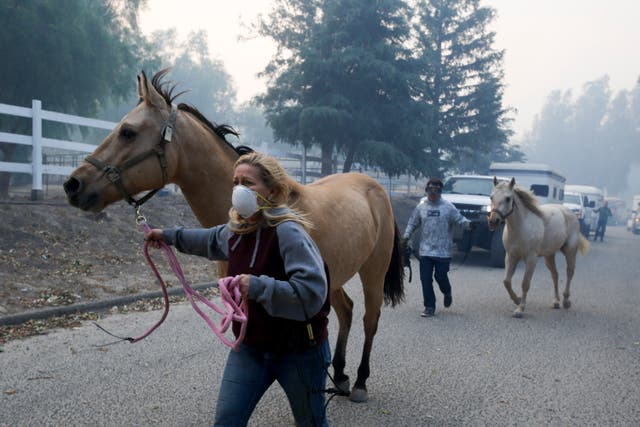 Horses are evacuated from a ranch in Simi Valley, California
