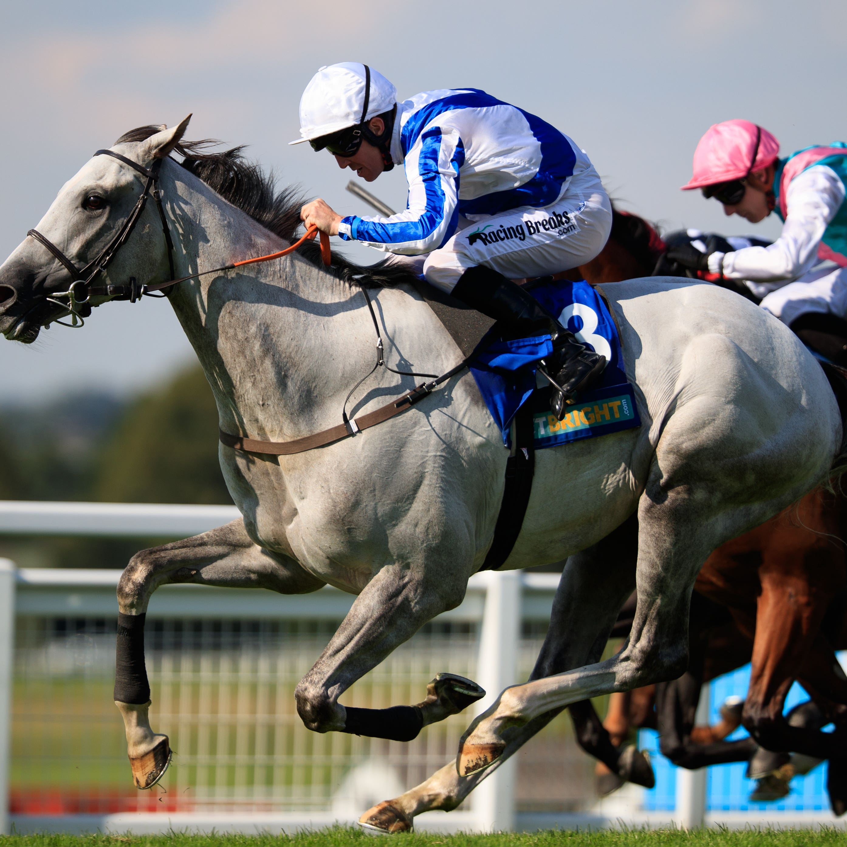 Thundering Blue is set to head to France