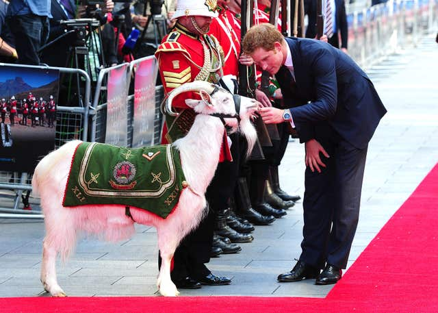 File photo dated 10/06/14 of Prince Harry petting Lance Corporal Shenkin III, which has died aged seven.