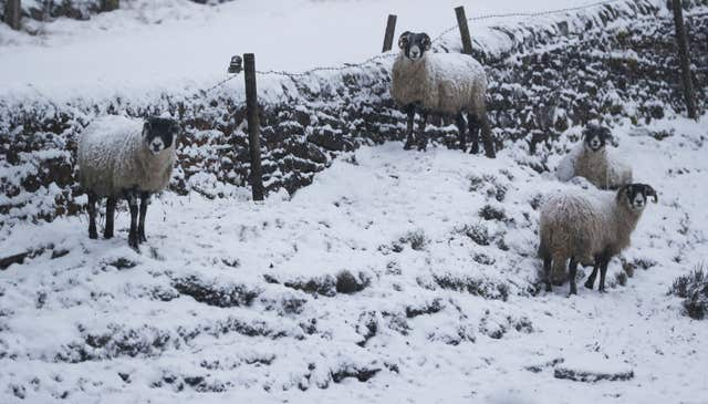 Sheep in a snow covered field in Northumberland, were lacking the joys of spring (Owen Humphreys/PA)