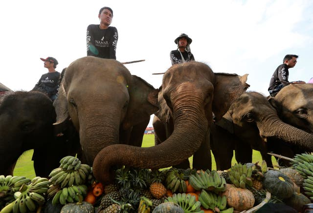 Fruit is the favourite pre-match meal for the elephants (Sakchai Lalit/AP)