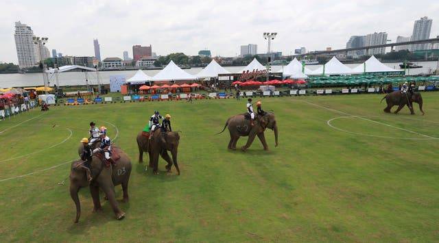 Polo players behind mahouts sit astride each elephants (Sakchai Lalit/AP)