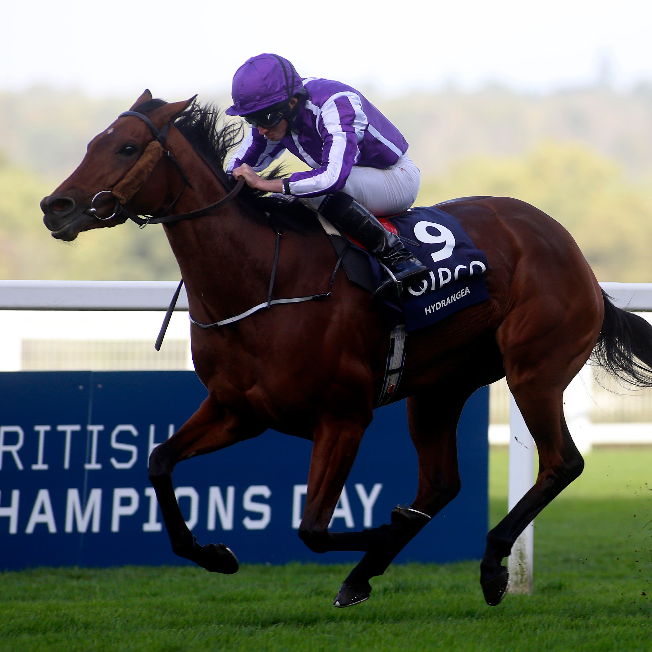 Hydrangea on her way to winning the Qipco British Champions Fillies & Mares Stakes at Ascot last year