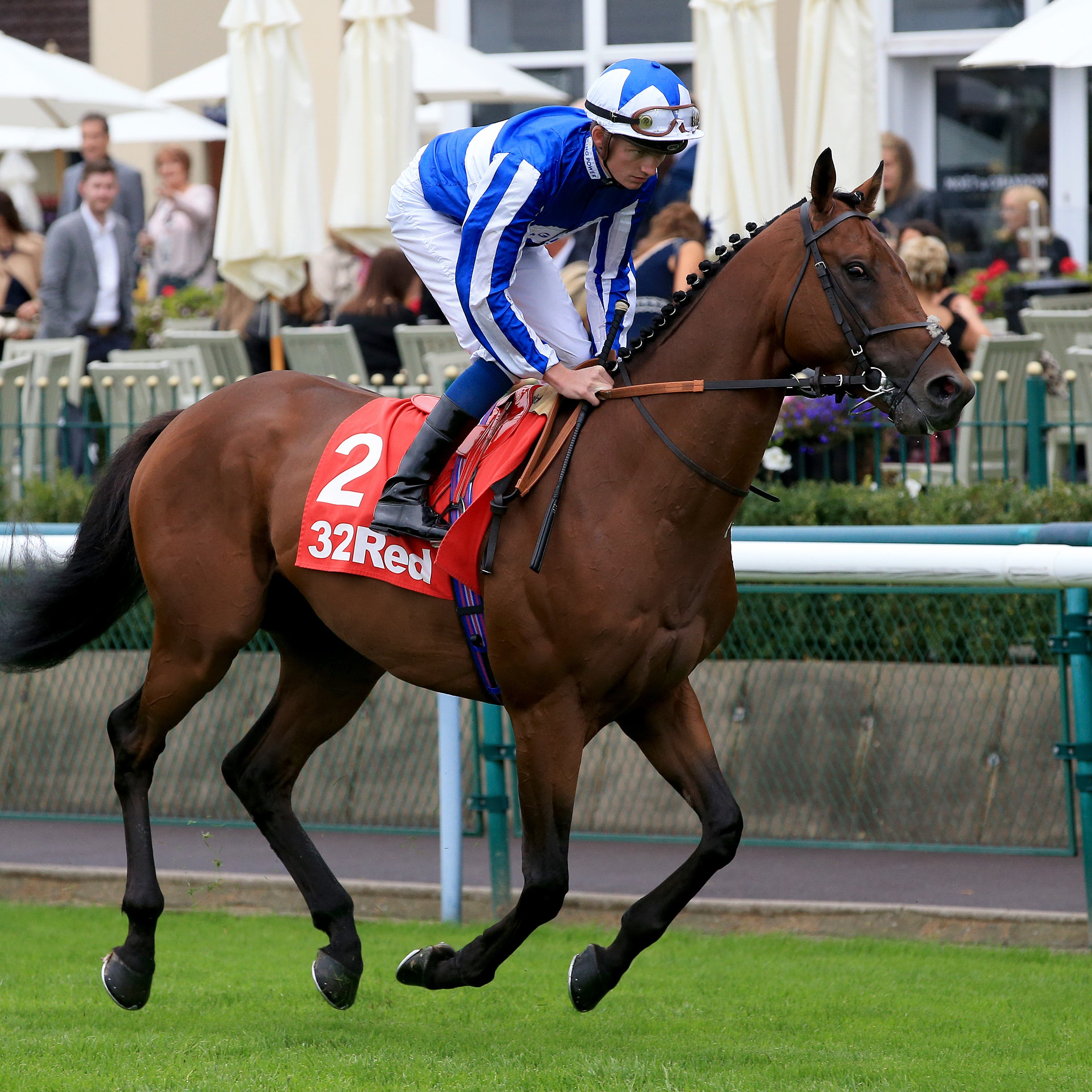 Donjuan Triumphant goes for glory at Doncaster