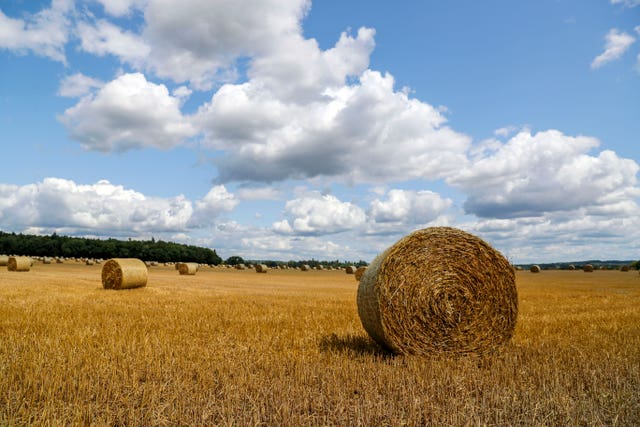 A field full of bailed straw
