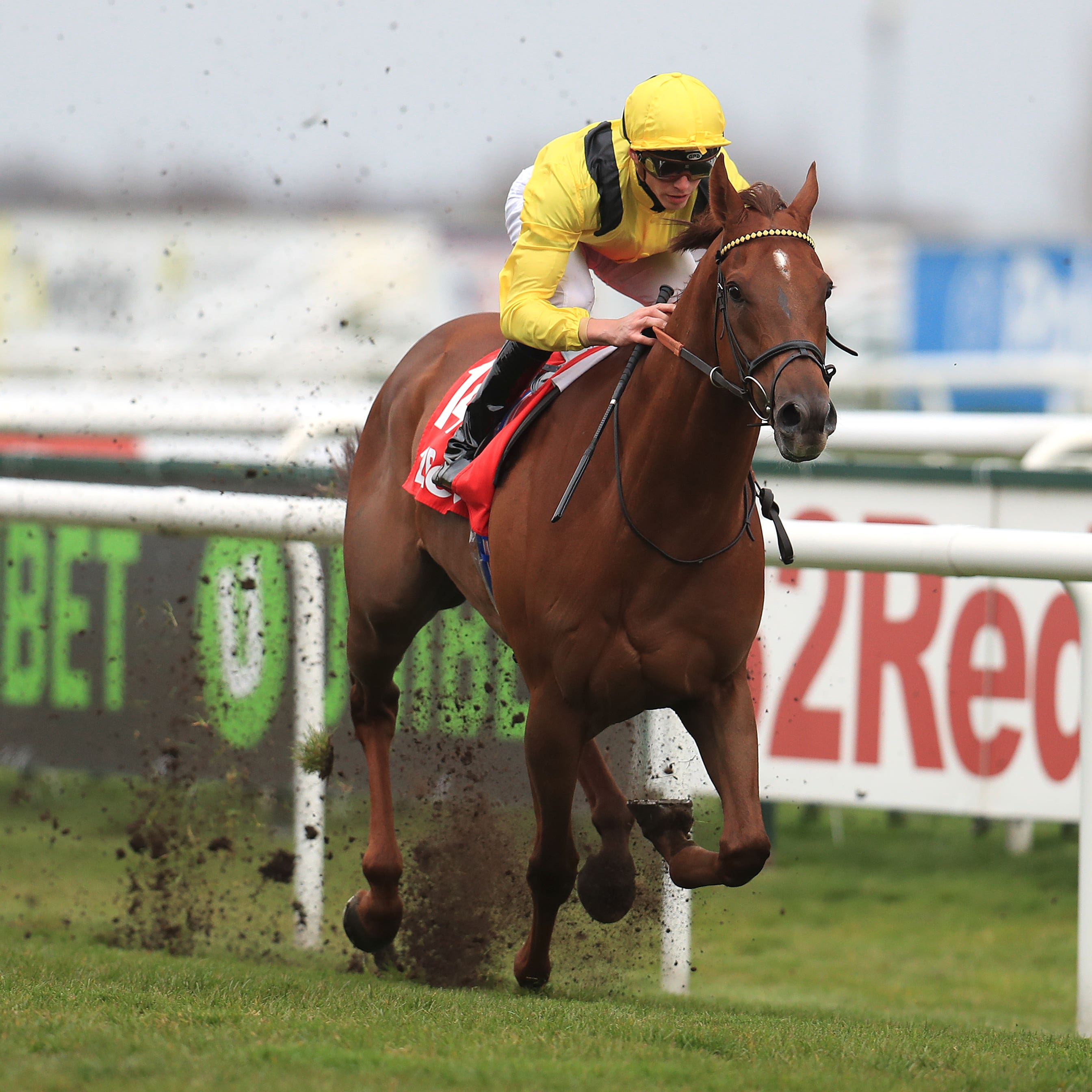Addeybb is not a certain runner in the Irish Champion Stakes