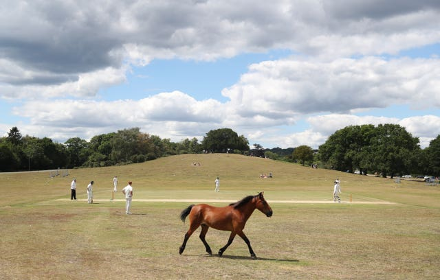 Recreational Cricket – Saturday 11th July
