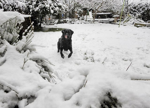 One dog enjoyed the snow in Rotherham (@Gez_Robinson/Twitter/PA)