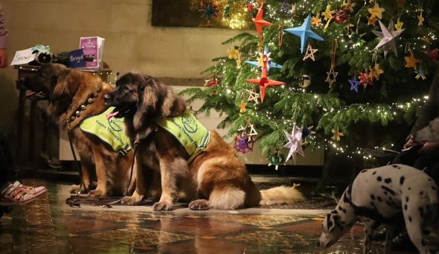 Therapy dog carol service