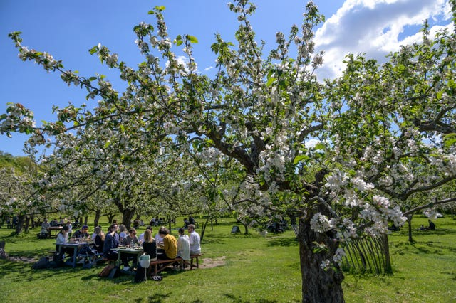 People enjoy the sunny weather in the idyllic surroundings of the garden cafe at Djurgarden in Stockholm (Anders Wiklund/TT/AP)