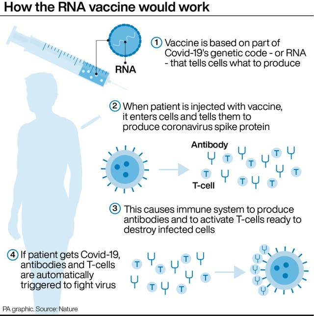 How the RNA vaccine would work