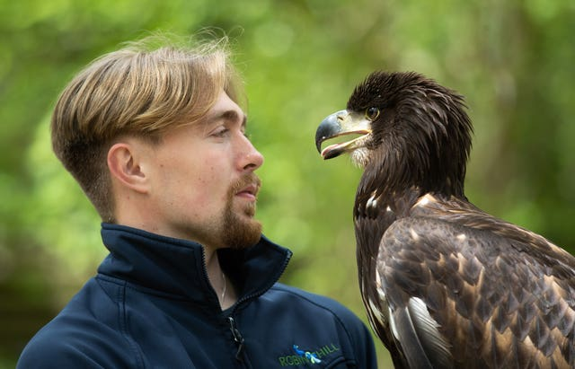 'Awe-inspiring' white-tailed sea eagle arrives on Isle of Wight, 2.59722162%, daily-dad%