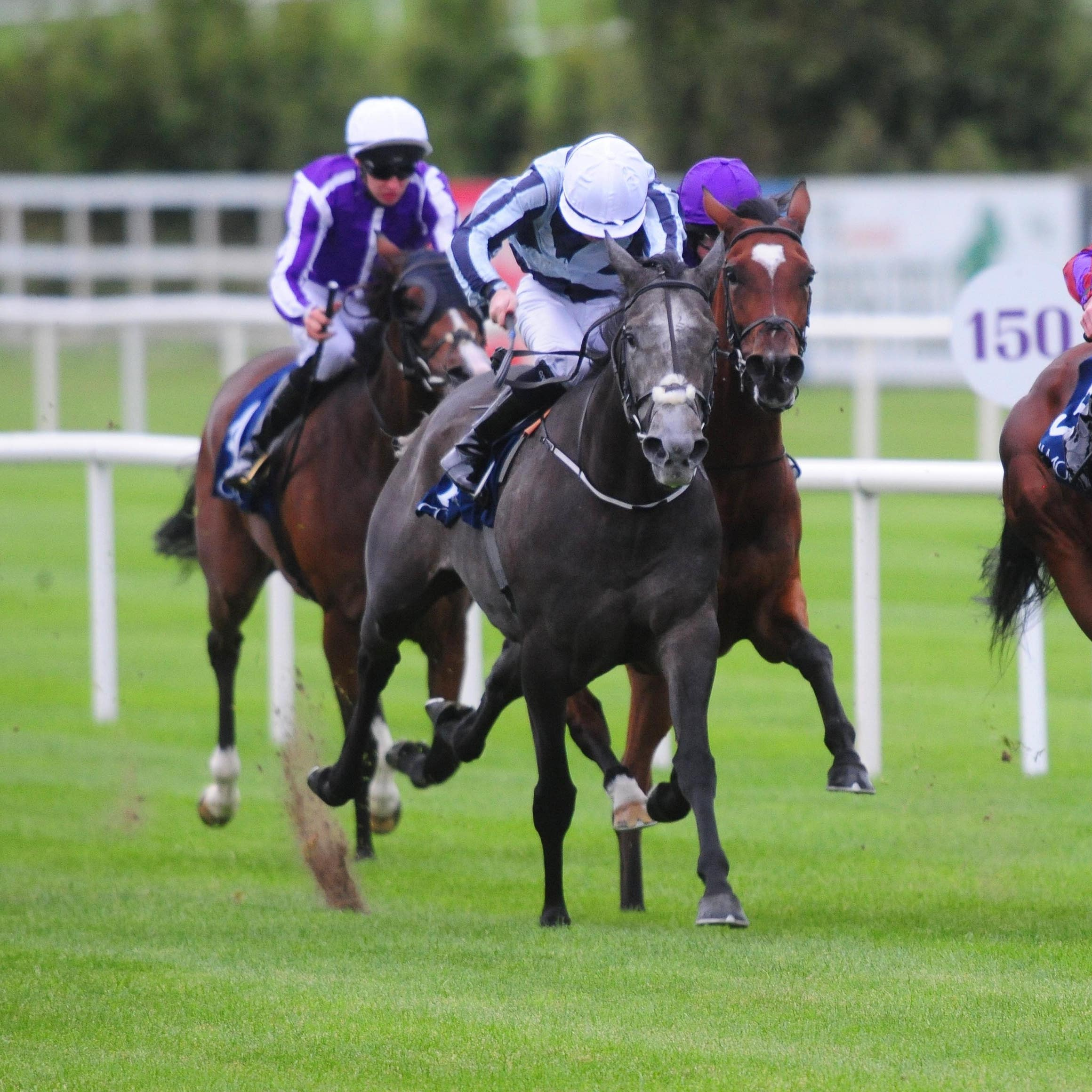 Alpha Centauri (left) picked up an injury at Leopardstown