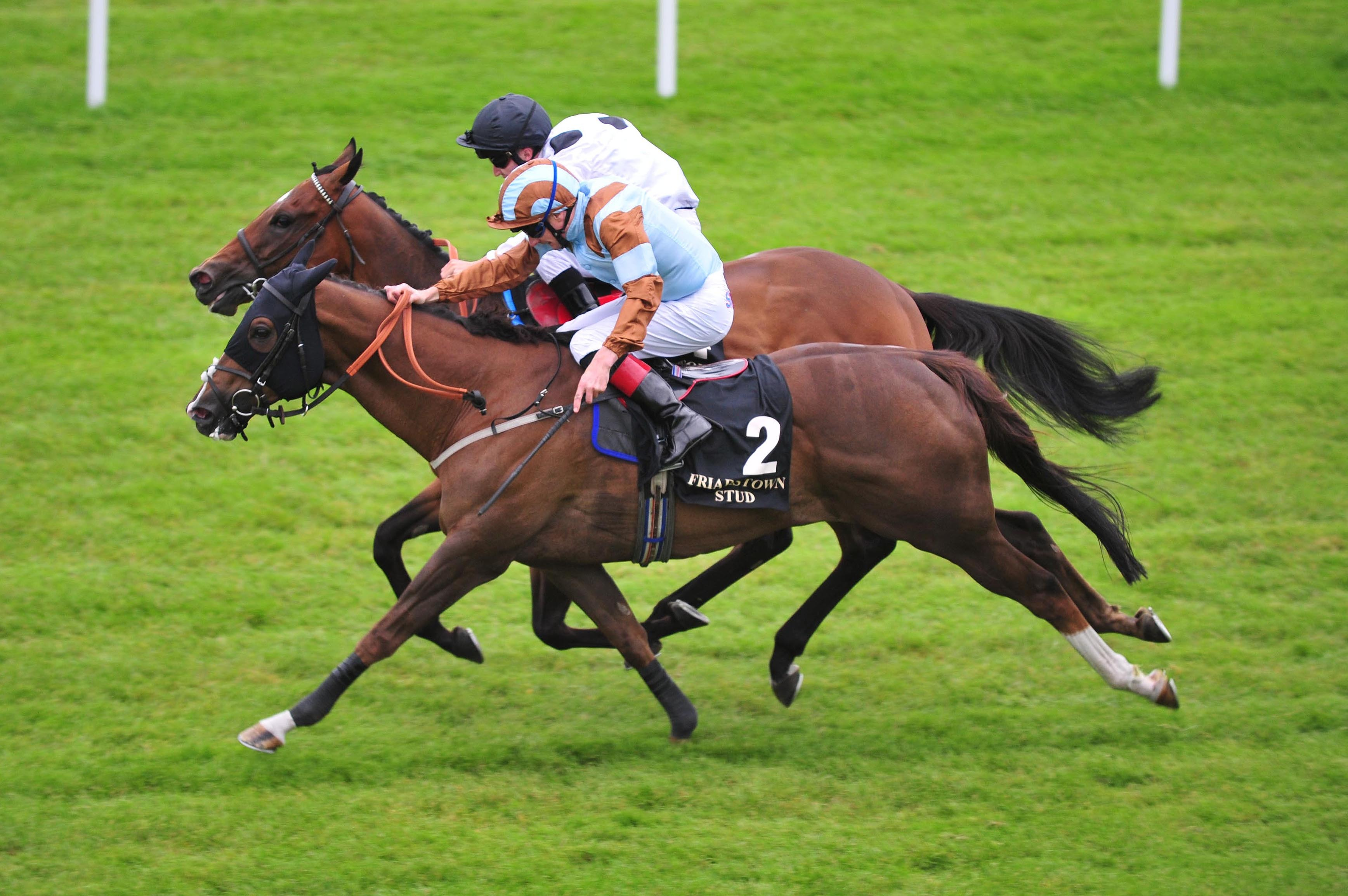 Mick Appleby's veteran sprinter Caspian Prince (nearside) is ready to return to action in the Temple Stakes