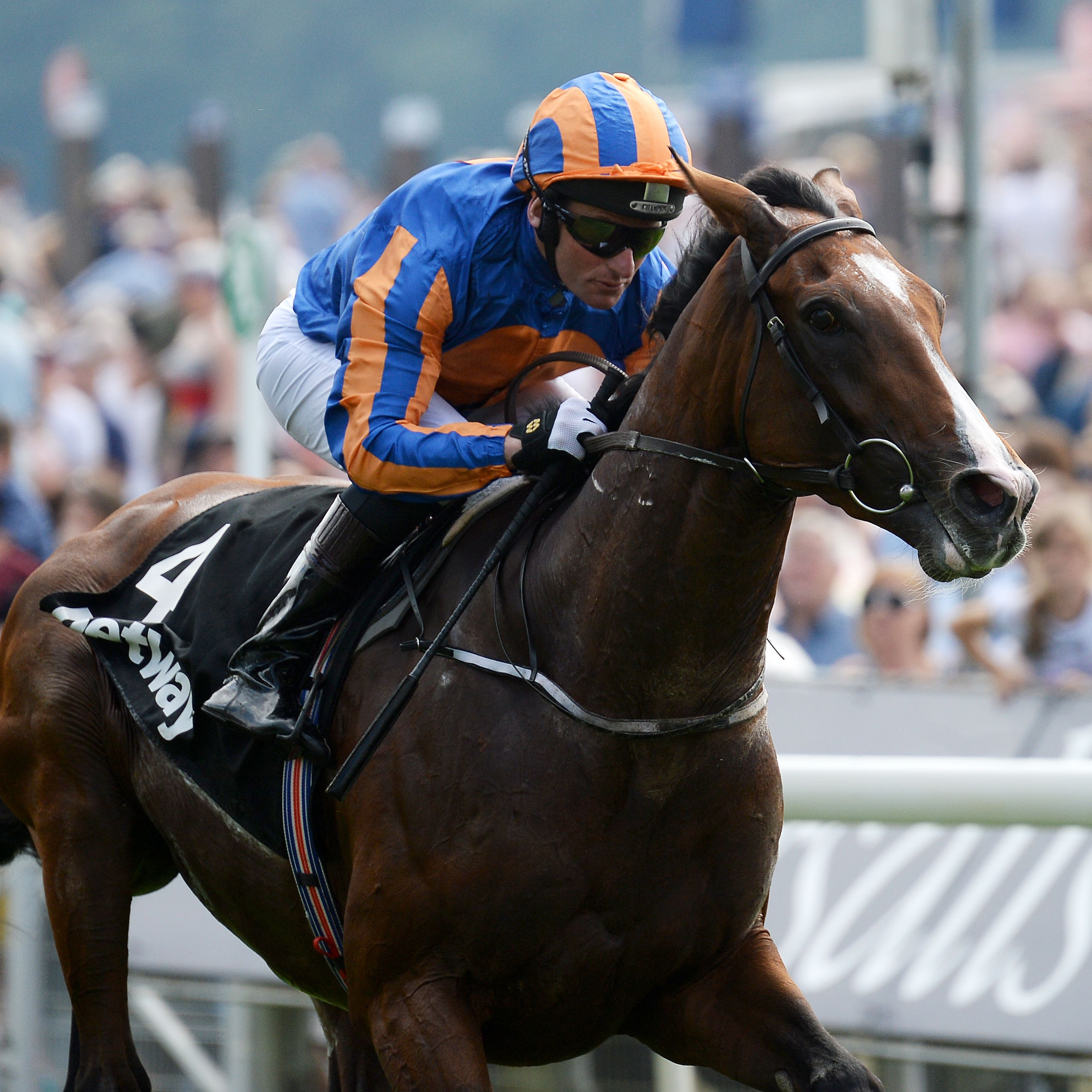 Idaho could be part of Aidan O'Brien's team at Naas on Sunday