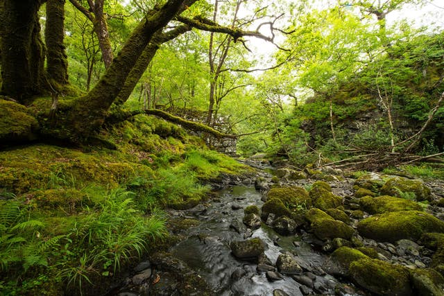 Woodland Trust appeal