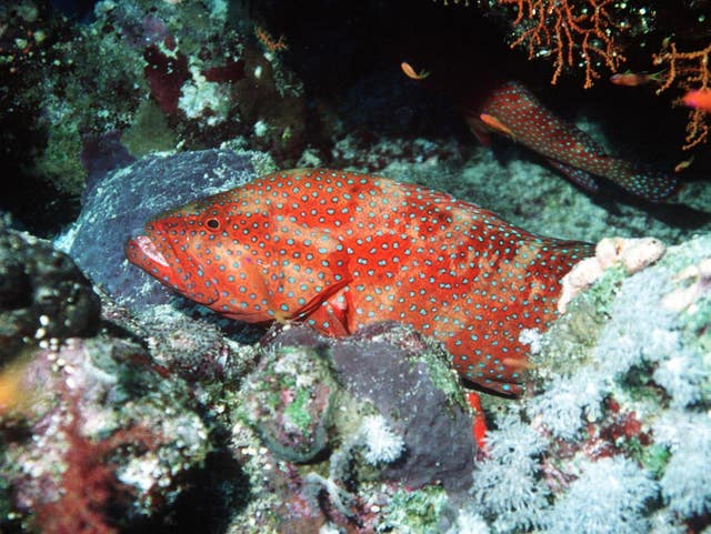 A fish near a coral reef