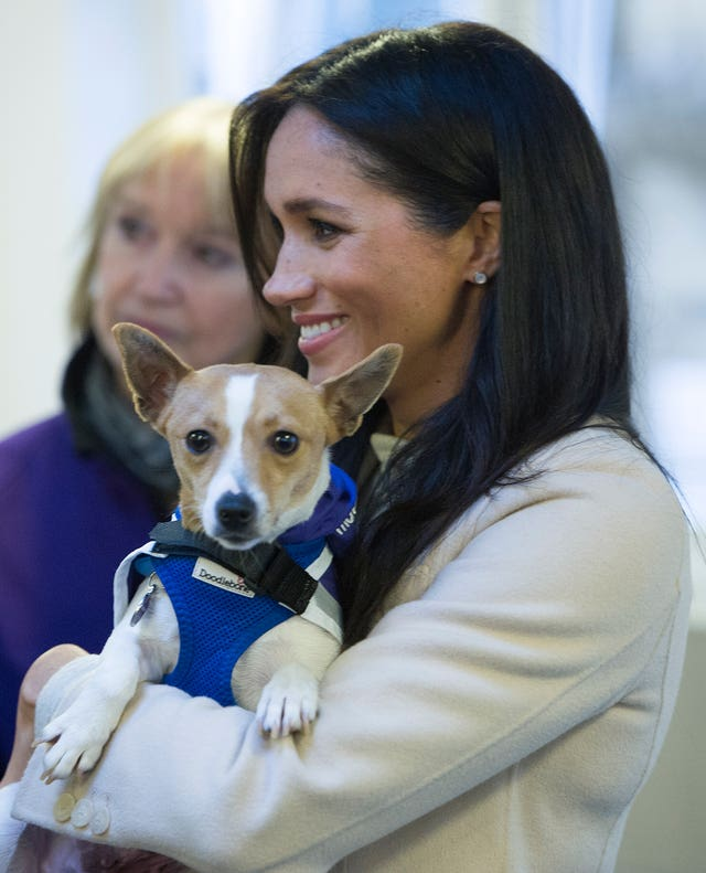 Meghan at Mayhew