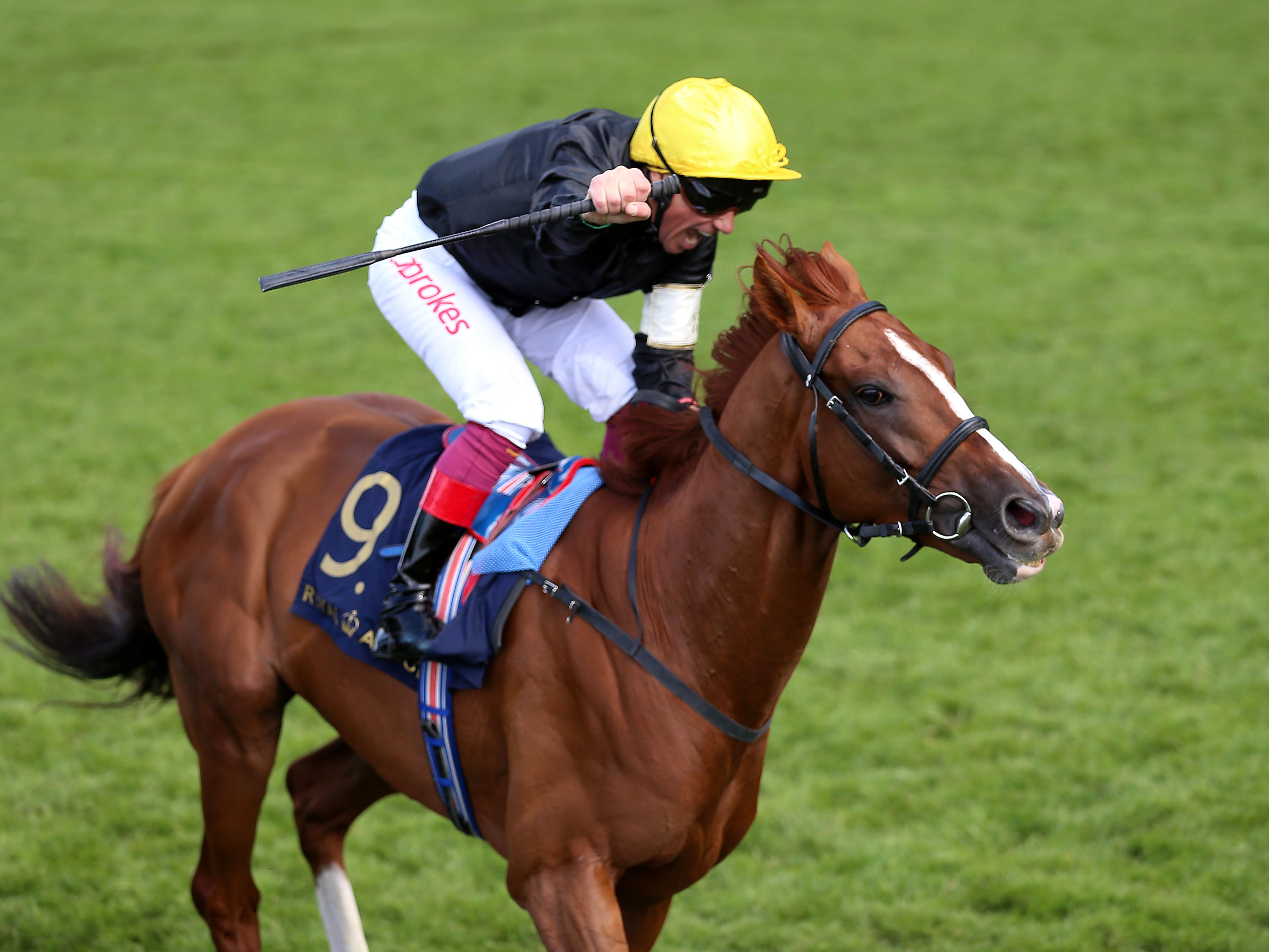 Stradivarius after winning the Gold Cup at Royal Ascot (Nigel French/PA)