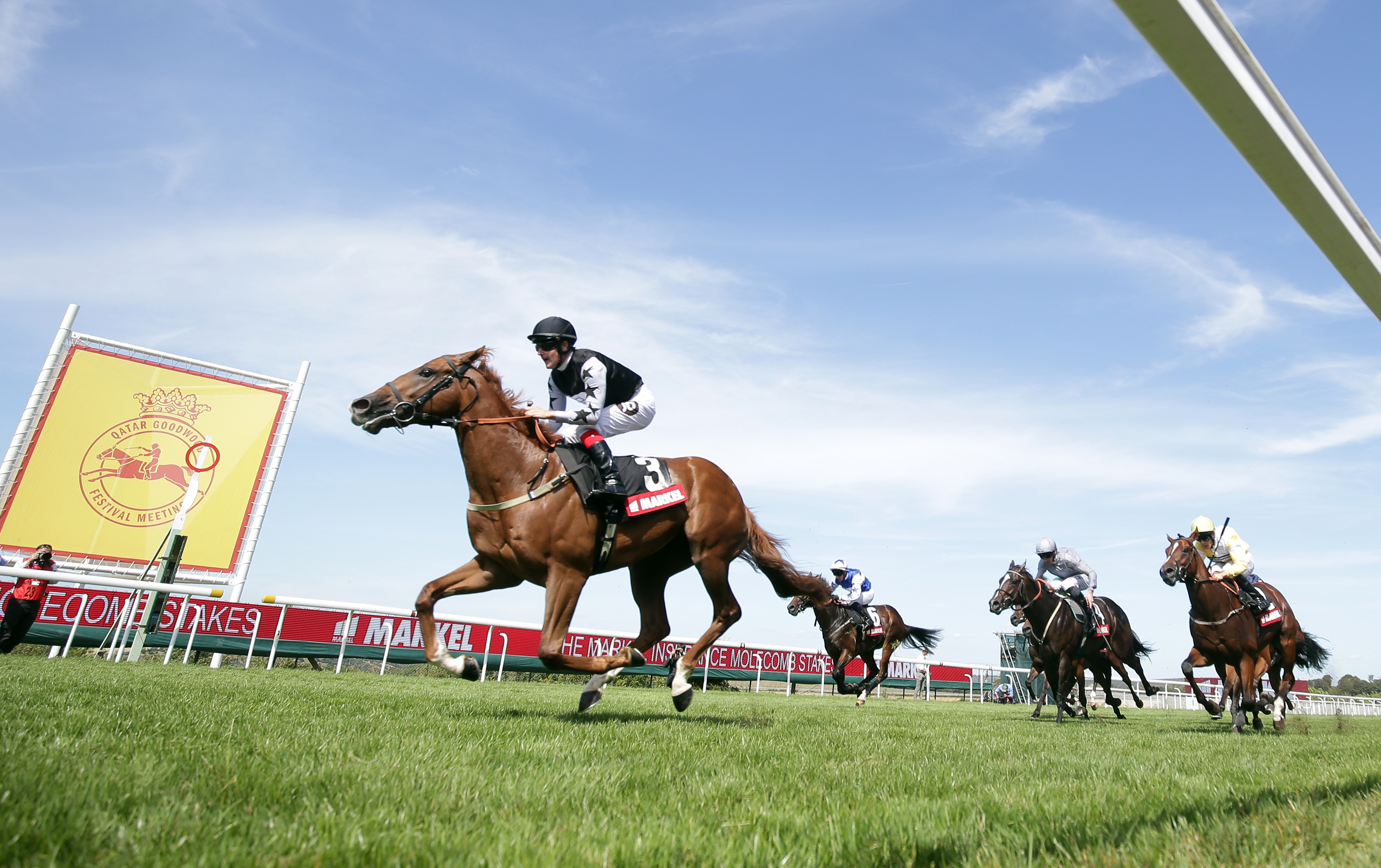 Rumble Inthejungle is seeking to return to the form he showed at Glorious Goodwood