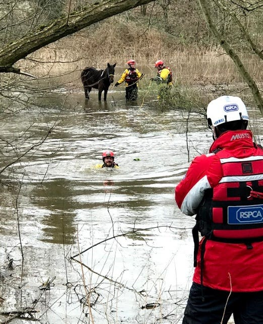 The RSPCA's specialist water rescue team swam across flood water (RSPCA/PA)