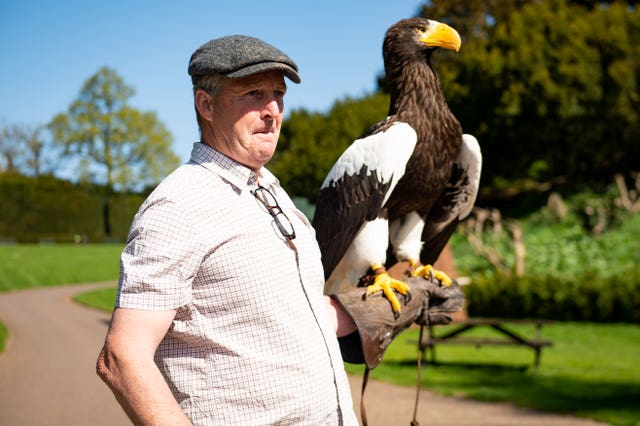 Head falconer Chris O'Donnell exercises a Steller's Sea Eagle at Warwick Castle
