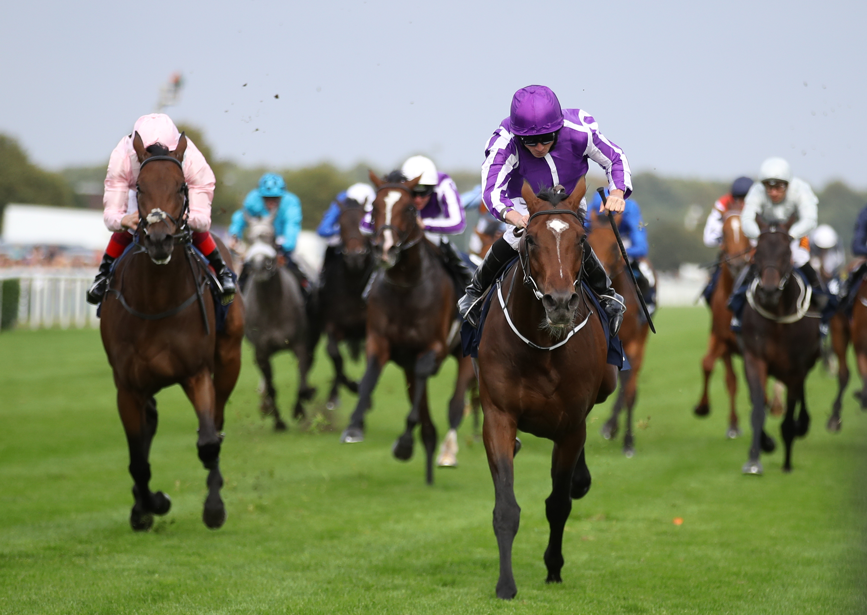 Kew Gardens will attempt to add the Irish St Leger to his CV (Tim Goode/PA Images