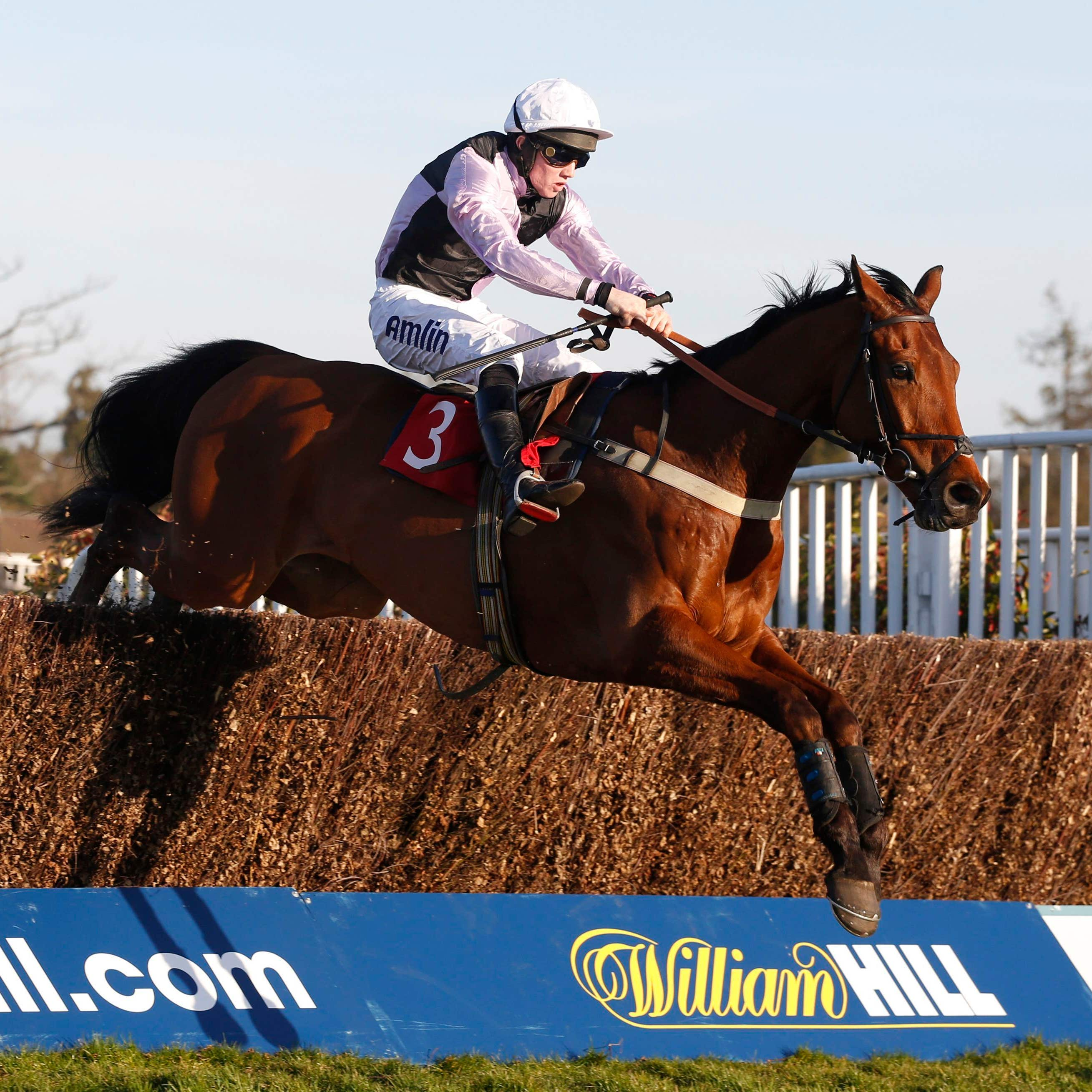 Traffic Fluide is set for a prep run over hurdles