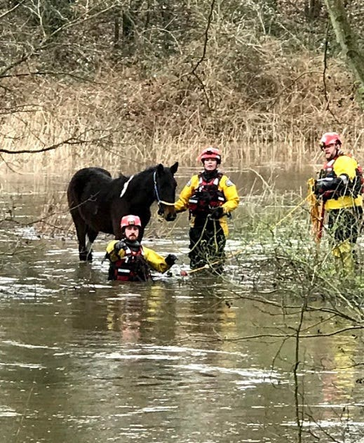 A pony was rescued from a flooded field in Guildford (RSCPA/PA)