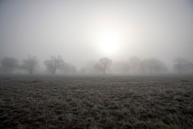 Frost and fog in Windsor Great Park, Berkshire