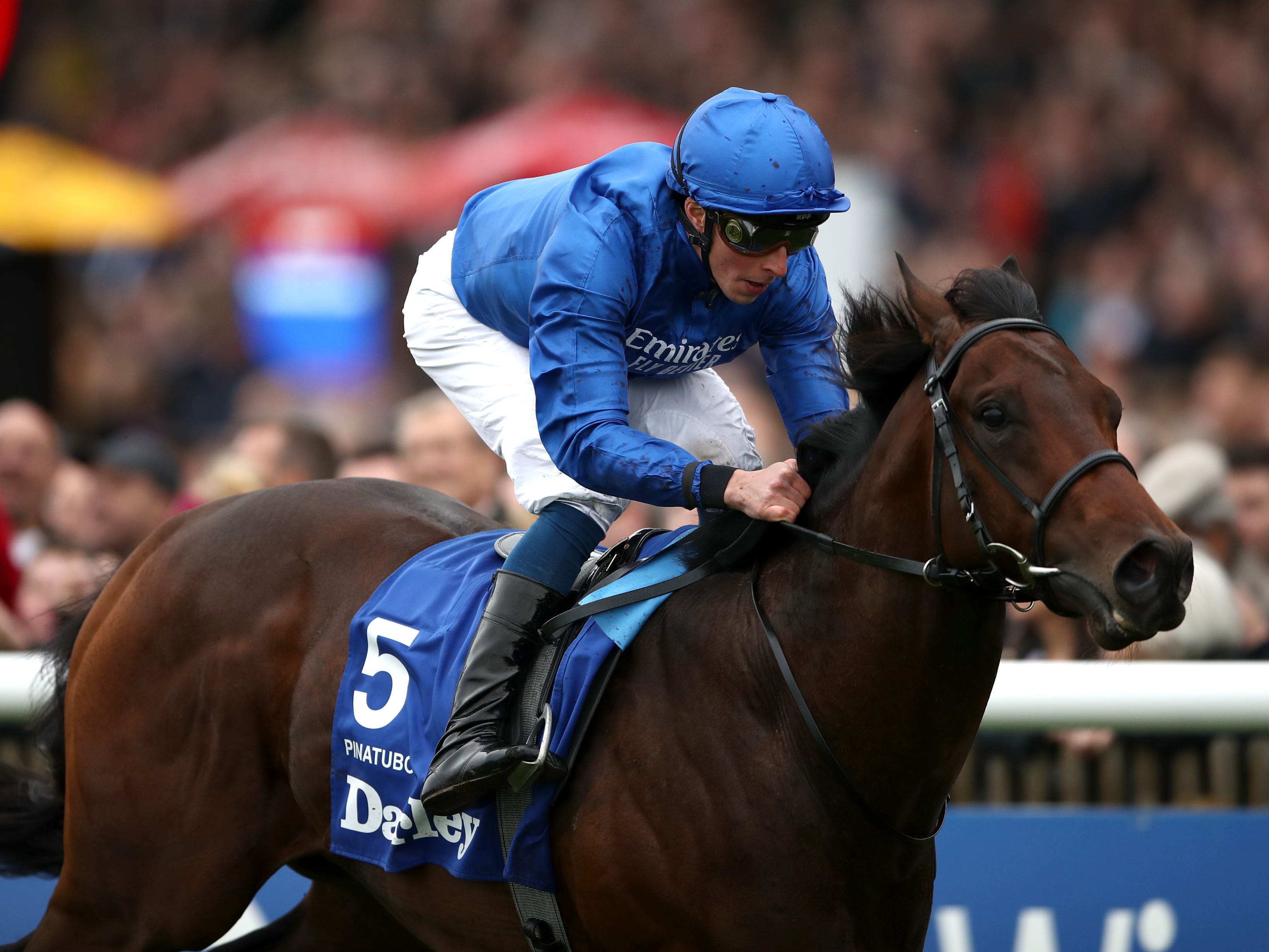 Pinatubo could head to France for the Qatar Prix Jean Prat on his next start (Tim Goode/PA Images)