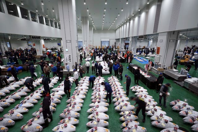 Japan Tuna Auction