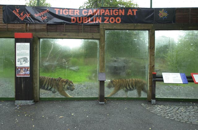 Tiger enclosure at Dublin Zoo