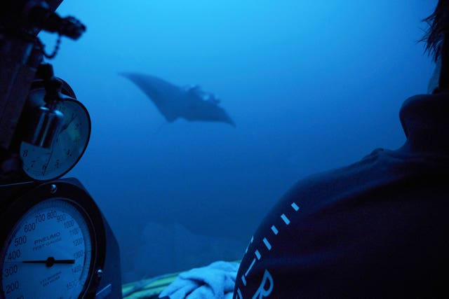 A manta ray swims near the submersible during a dive off the coast of the island of St Joseph in the Seychelles