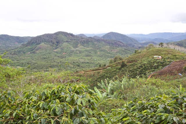 A highland coffee farm in Sumatra (James Robinson/Fairtrade Foundation/PA)