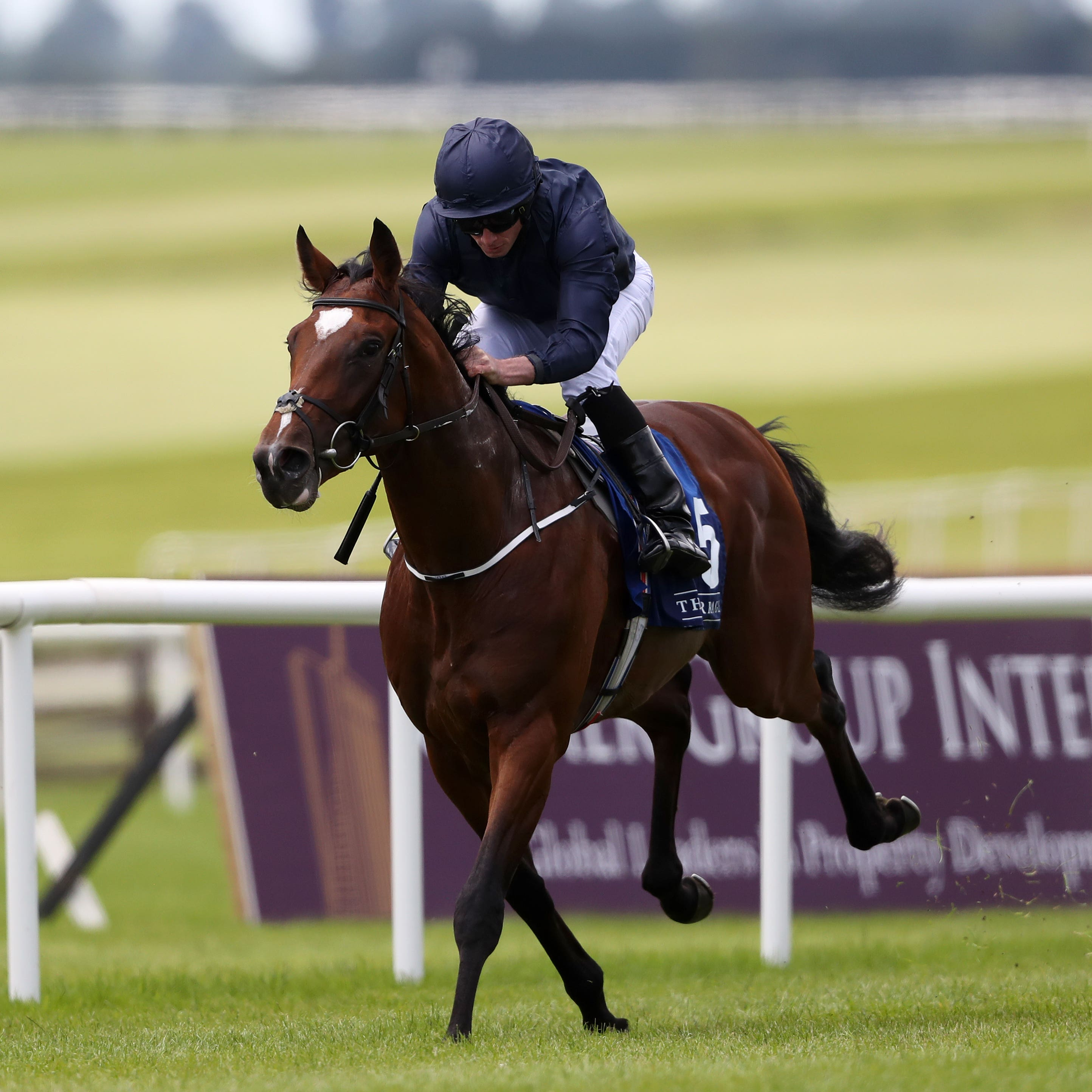 Gustav Klimt, one of three Hungerford Stakes possibles for Aidan O'Brien