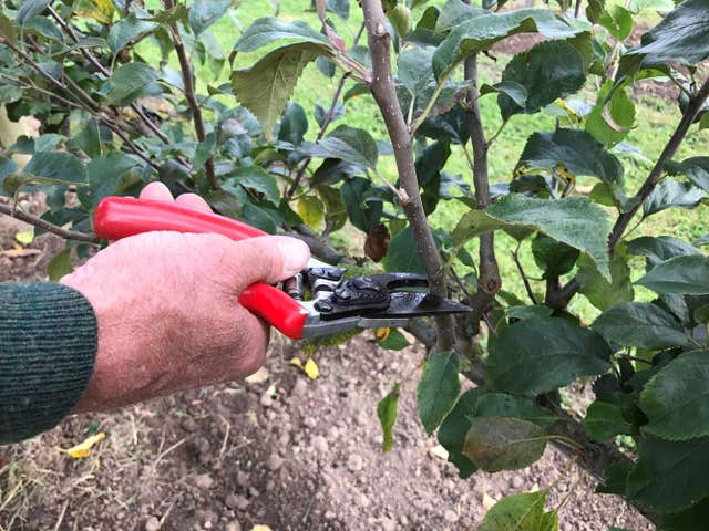 Secateurs should not cut branches thicker than your finger (Hannah Stephenson/PA)