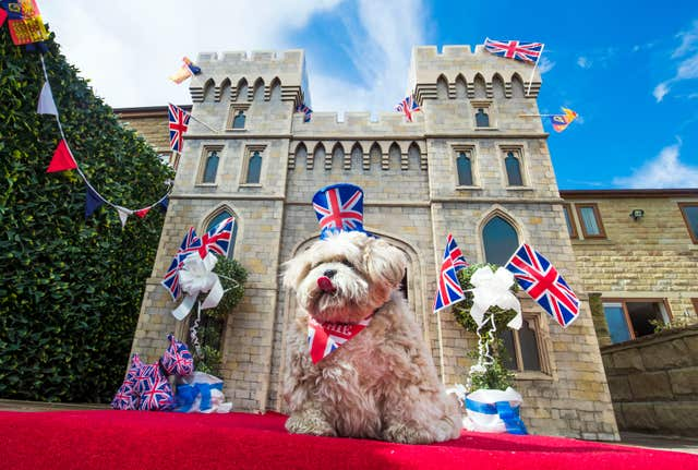 Windsor Castle replica for dog