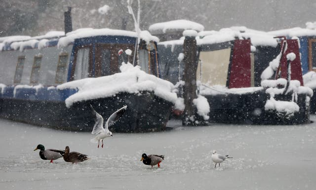 Gulls and ducks stand on ice in front of canal boats on the Kennet and Avon Canal at the Caen Hill Locks near Devizes, in Wiltshire