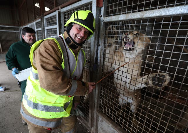 Crew manager Kevin Eddie from SFRS feeds a lion at Blair Drummond Safari Park (Andrew Milligan/PA)