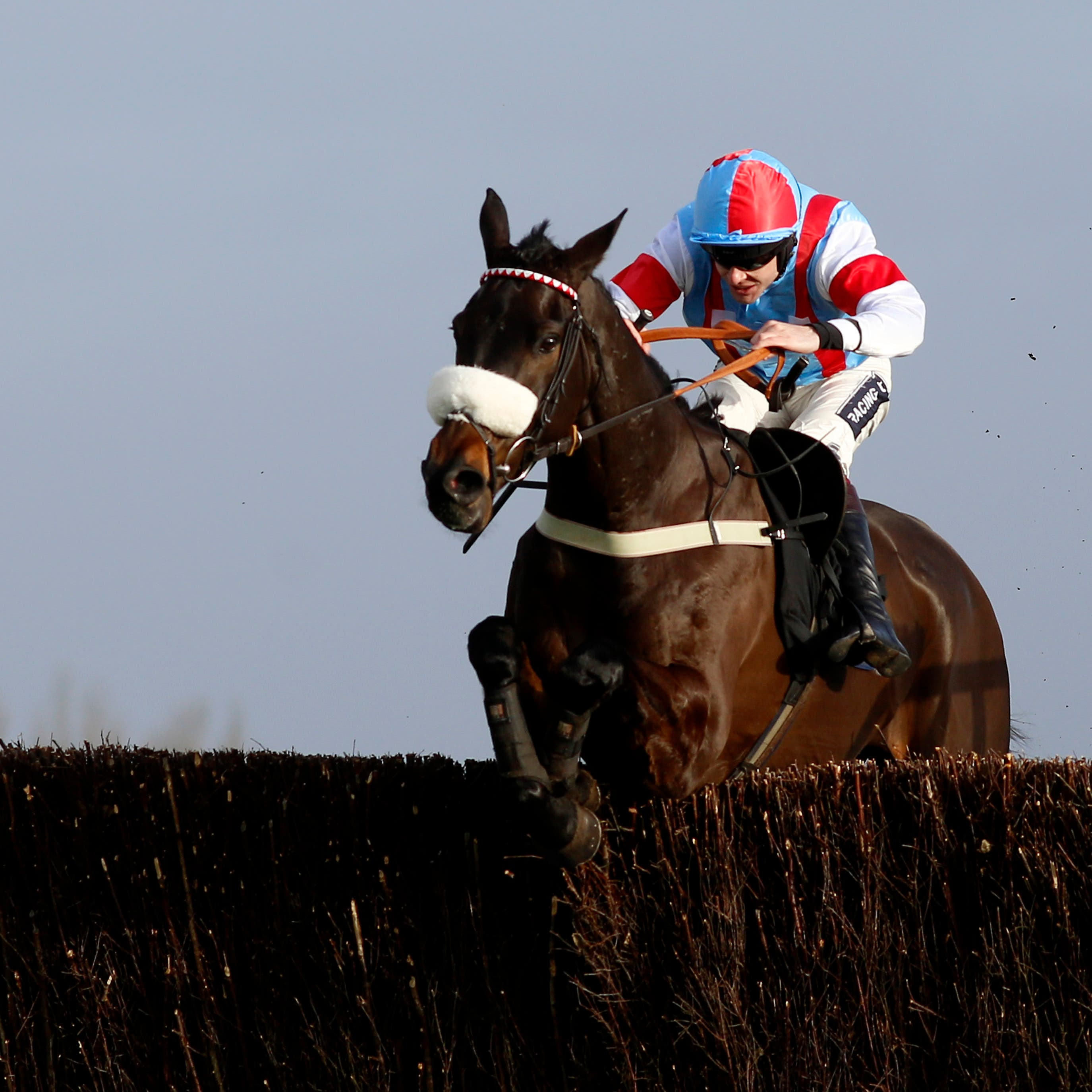 Saint Calvados could head for the Ladbrokes Dublin Chase at Leopardstown