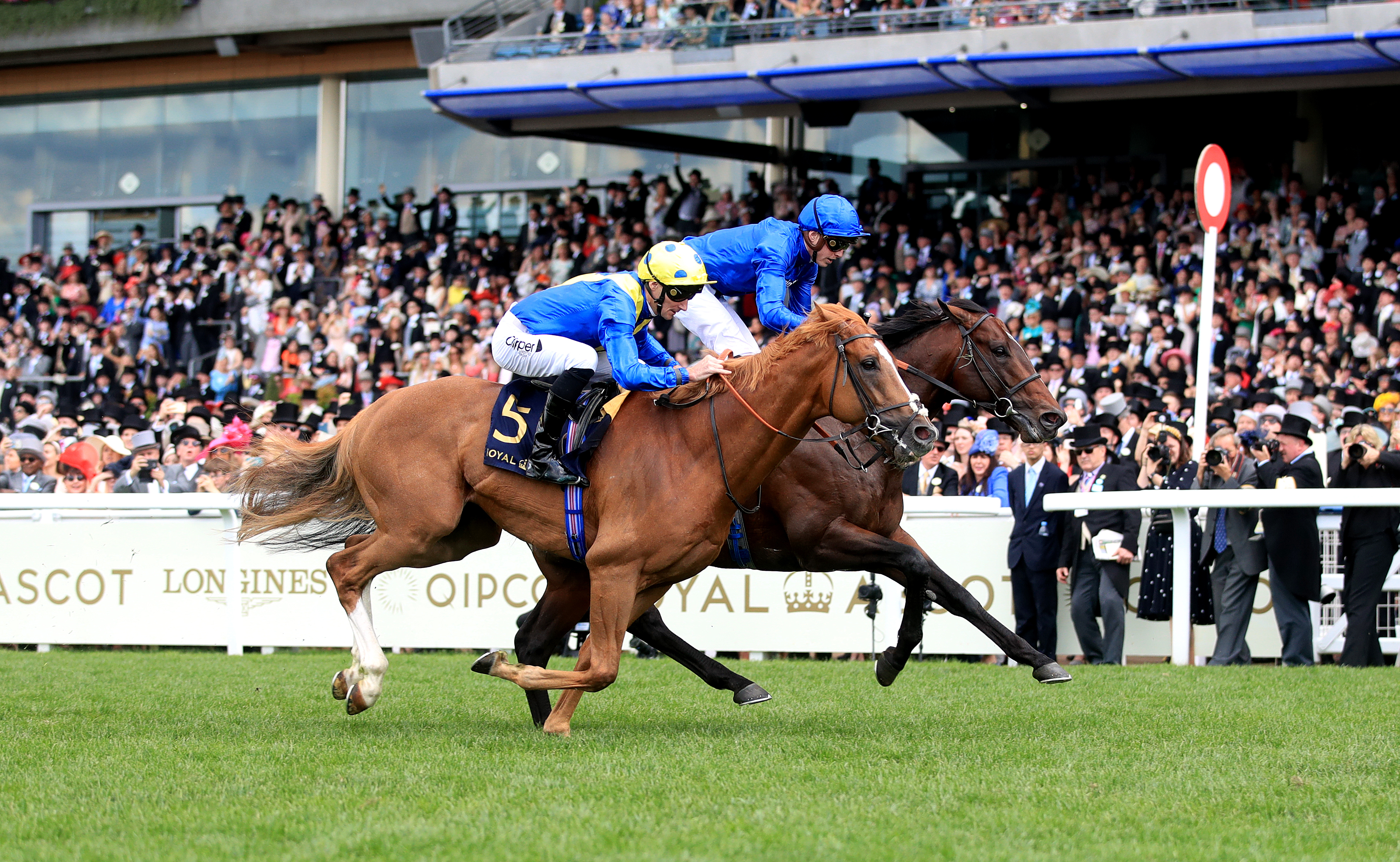 Dream Of Dreams narrowly failed to catch Blue Point