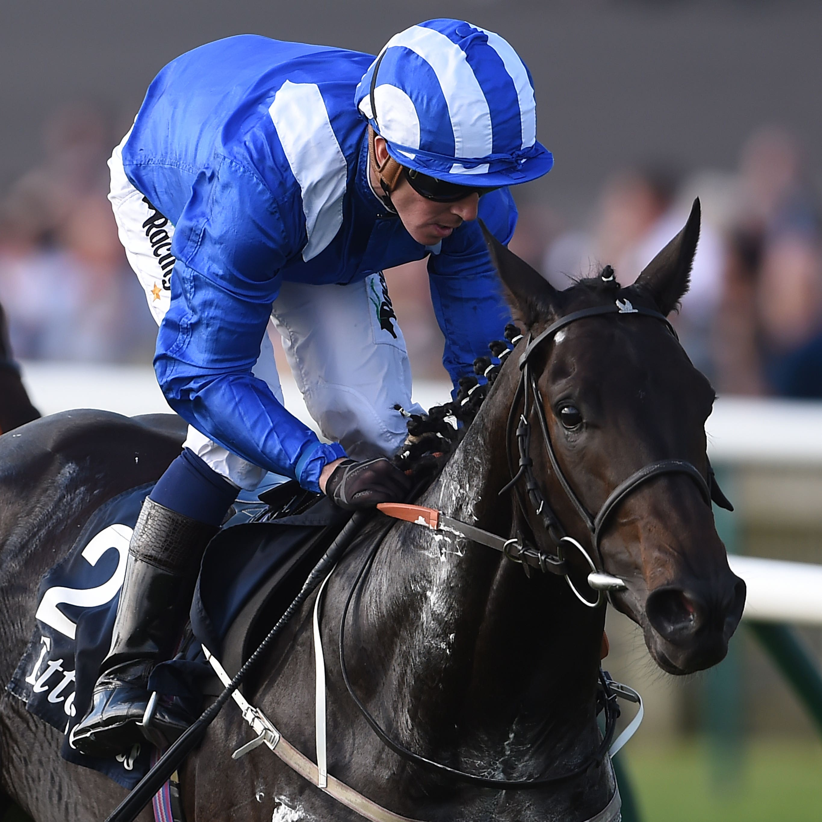 Elarqam runs in the Earl of Sefton Stakes at Newmarket