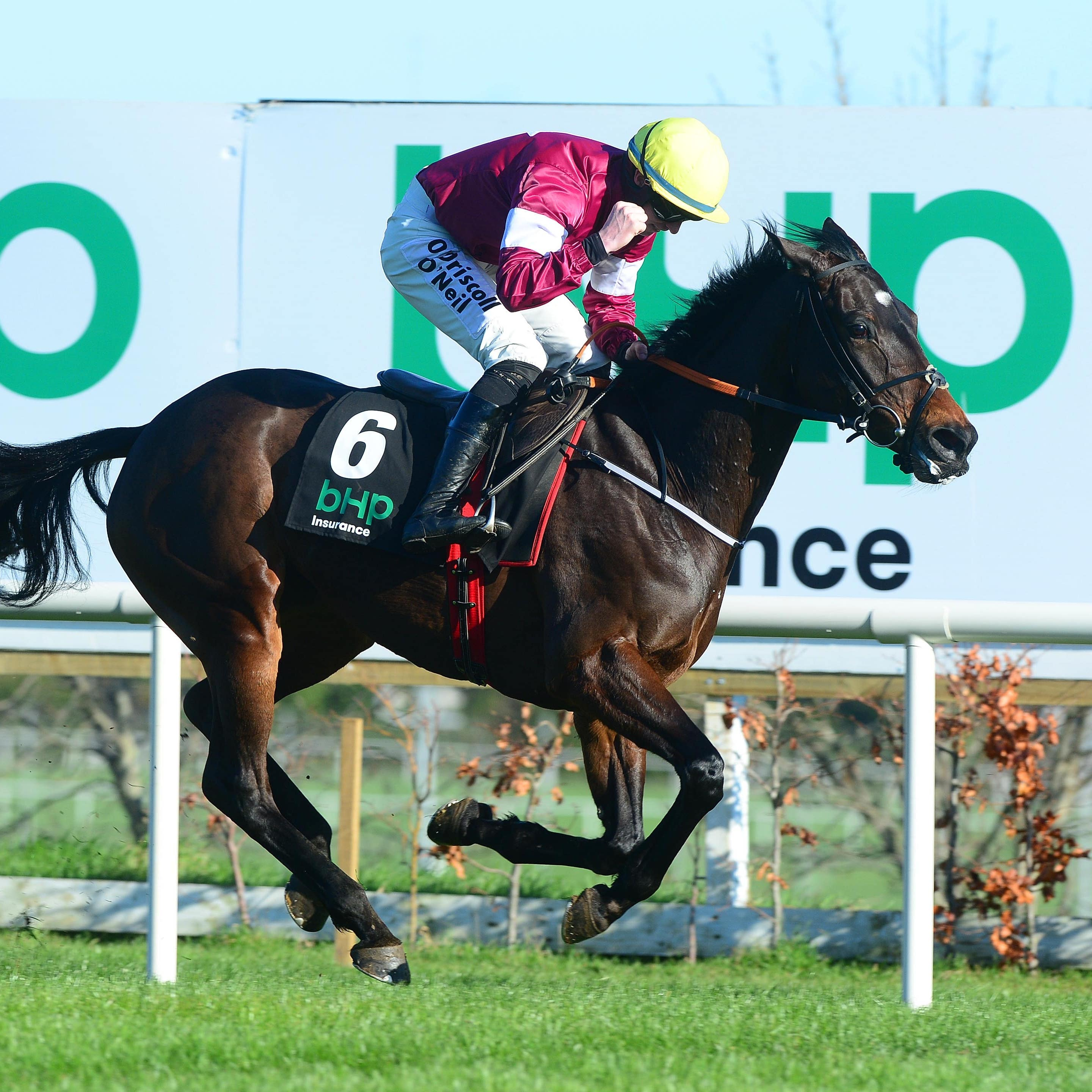 Apple's Jade will aim to bounce back at Punchestown
