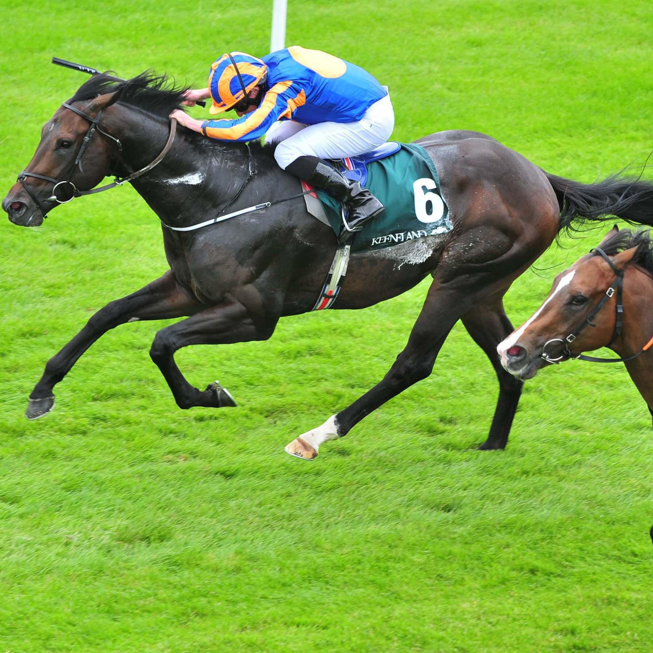 Sioux Nation (left) winning the Phoenix Stakes last season (PA)