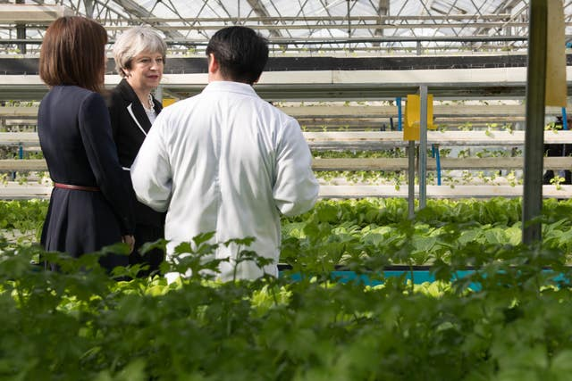 Theresa May visits the greenhouses of Agrigarden, a food research and development company in Beijing